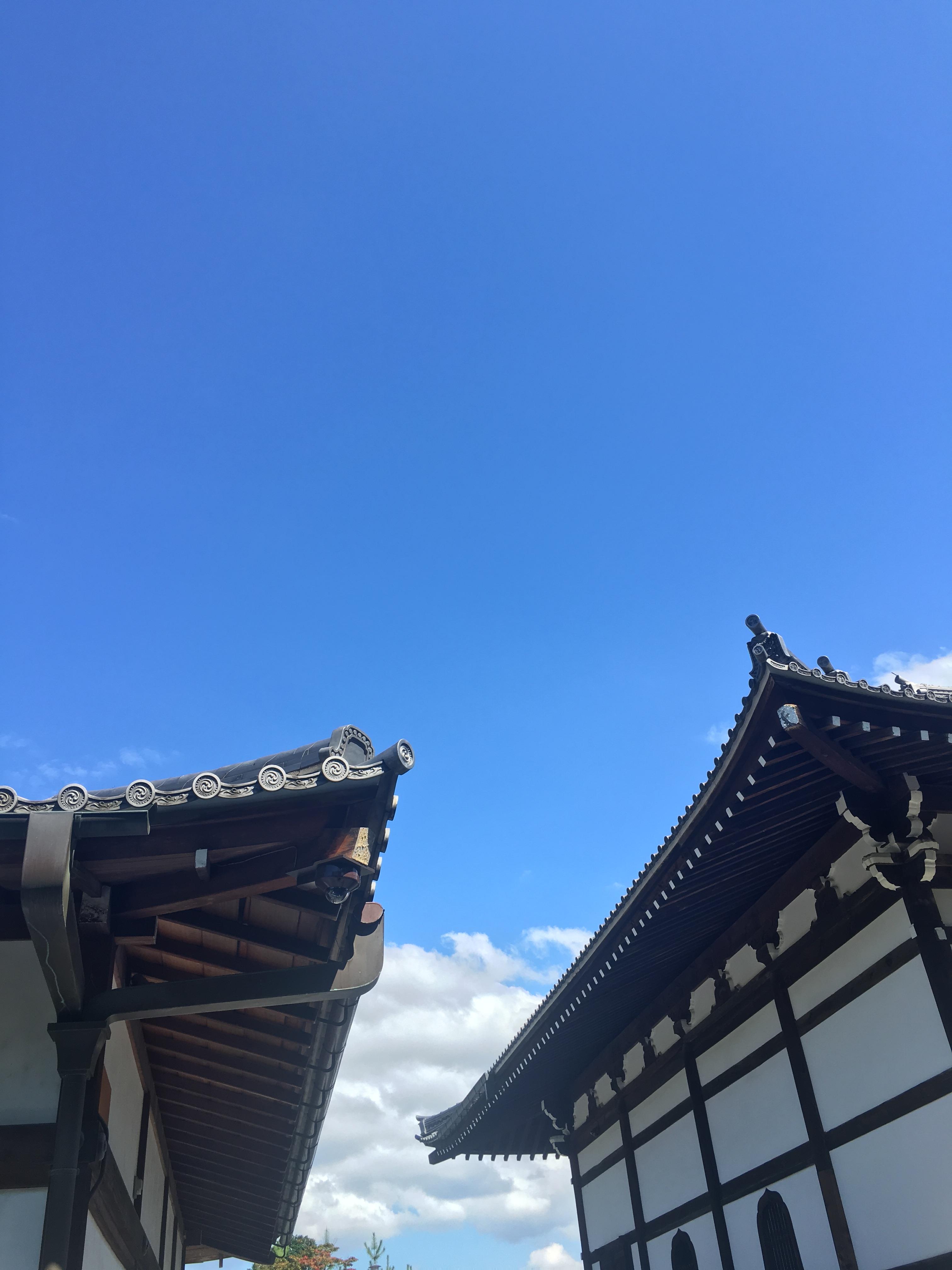🌏 Queens goes Worldwide: Japonsko! 🌊