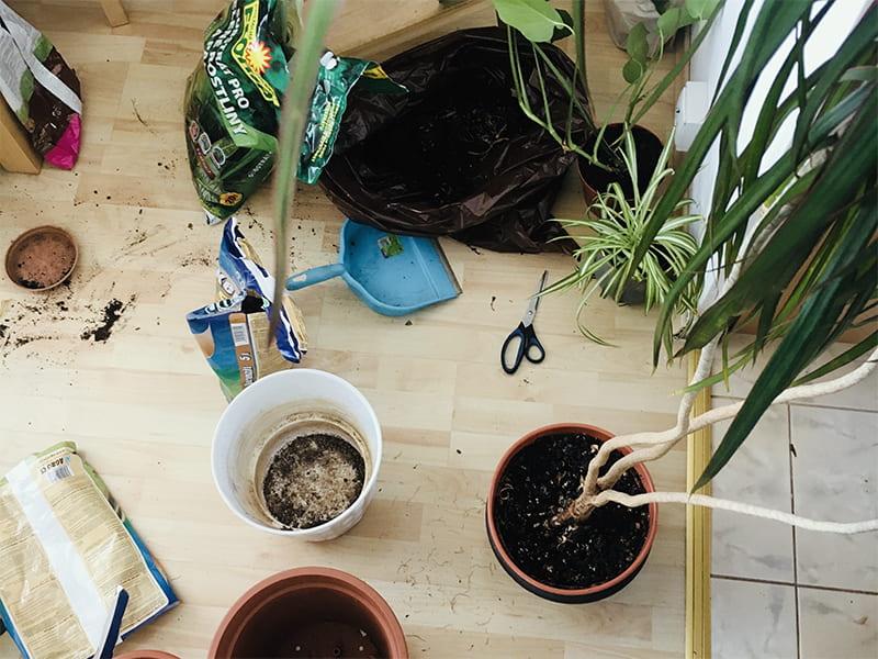 Zelené tipy z Queensu: co dělat s pokojovkami na jaře